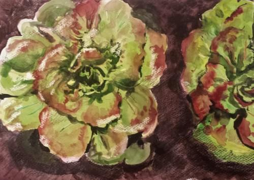 Grandma Hadley's Lettuce - SOLD OUT FOR 2021