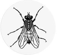 Cible Toilettes - Mouche Urinoir - 6 stickers