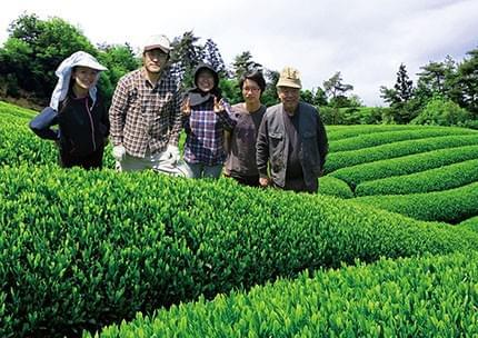Houjicha (Kyoto, Japon) 50 ou 100gr