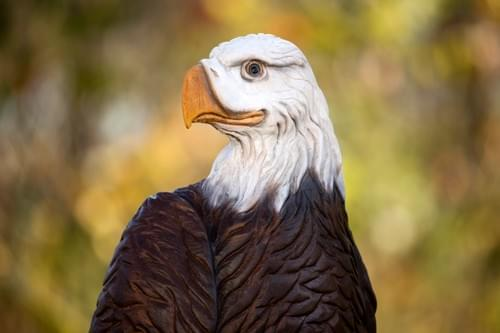 Painted Color  Bald Eagle- 4 ft Tall