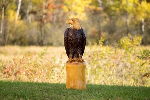 Natural Color Bald Eagle -4 ft Tall