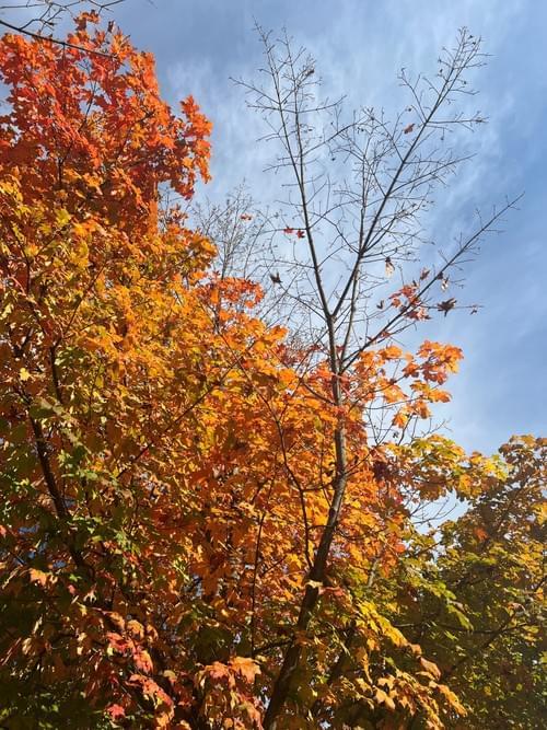 """""""Fall Reaching"""""""