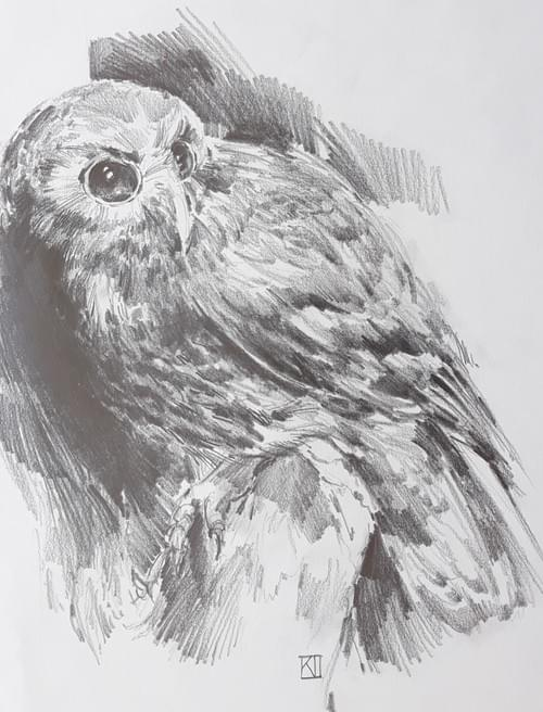 How to Draw Birds with Kimbra Taylor - September 5-6th, 9.30am to 5pm