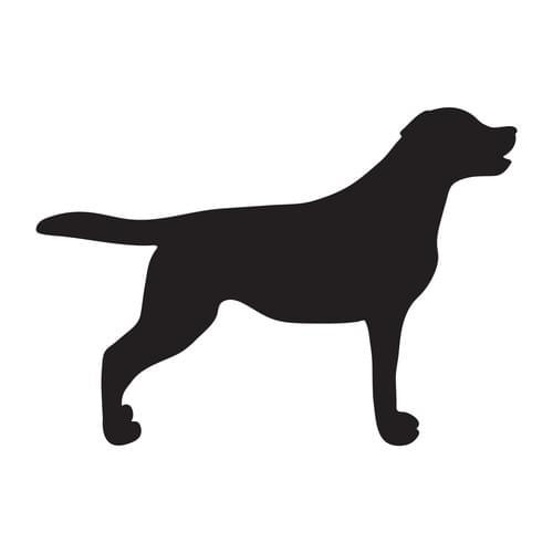 Service de détection canine de punaises de lit / Chien de détection -  Prix indicatif / Sur devis