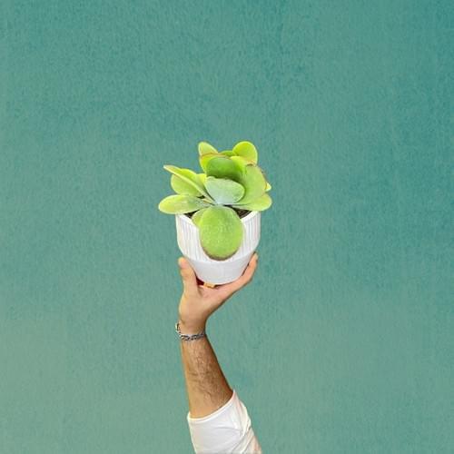 La Succulente