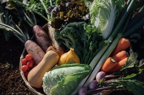いろいろ野菜ボックス