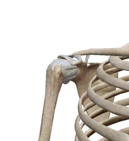 (中止)肩関節に対する関節マニュアルアプローチ