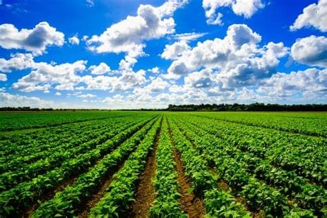 Fertilizante Agricultura