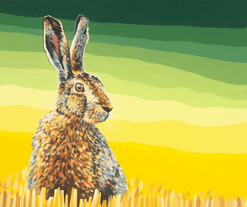 Hare in the Barley - Limited Edition of 50, Fine Art Prints