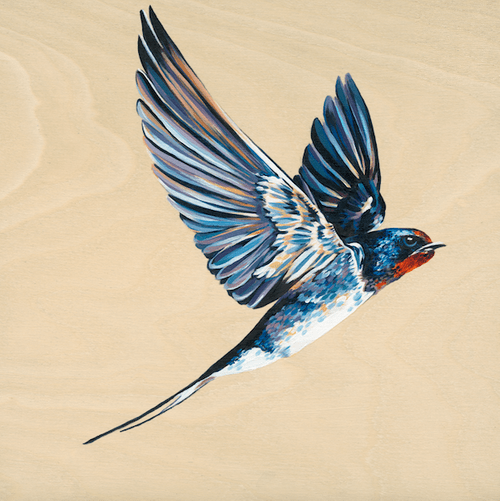 Swooping Swallow 1 - Limited Edition Fine of 25, Art Print
