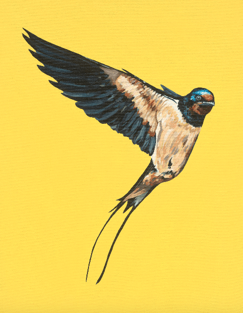 Barn Swallow - Limited Edition of 50, Fine Art Print