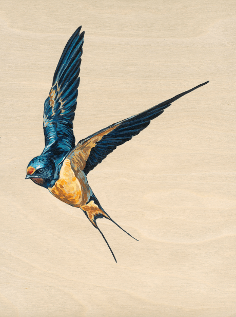 Swooping Swallow 2 - Limited Edition of 25, Fine Art Print