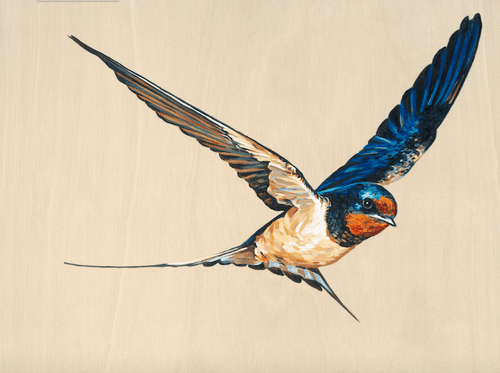 Swooping Swallow 3 - Limited Edition of 25, Fine Art Print