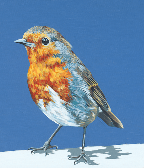 Rocking Robin - A4 Limited Edition of 50, Fine Art Print