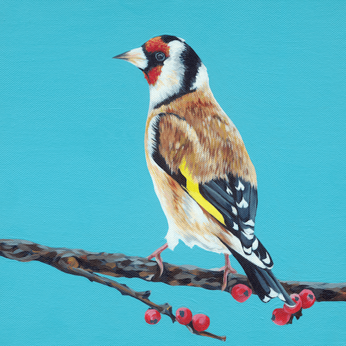 Little Finch - A4 Limited Edition of 50, Fine Art Print