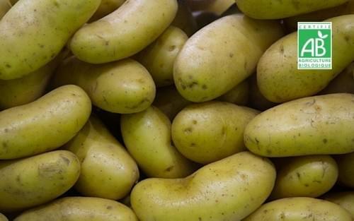 Pomme de terre nouvelle - 500 g - Chatelain Maraichage (95)