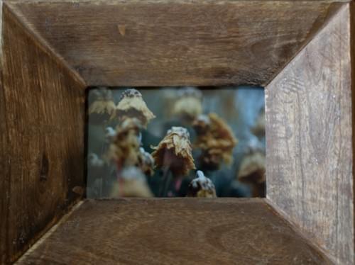 Fall flowerheads, 5x7, rustic angled wood frame