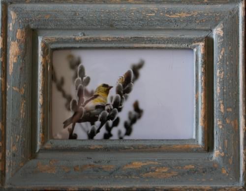 Goldfinch in Pussy WIllow, 5x7, in distressed blue frame