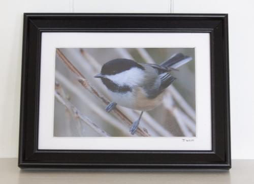 Chickadee, 5x7, in small black frame