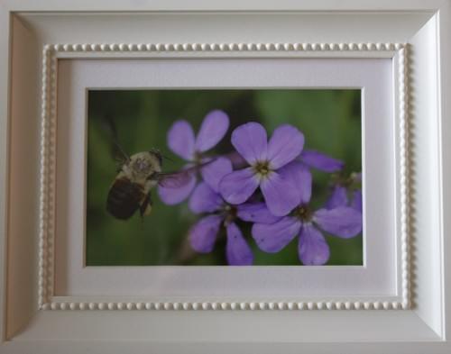 Bee on Purple Flower, 5x7, in white beaded frame