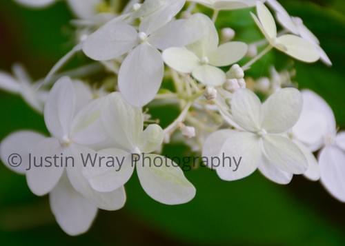 White Flowers on Green, Print