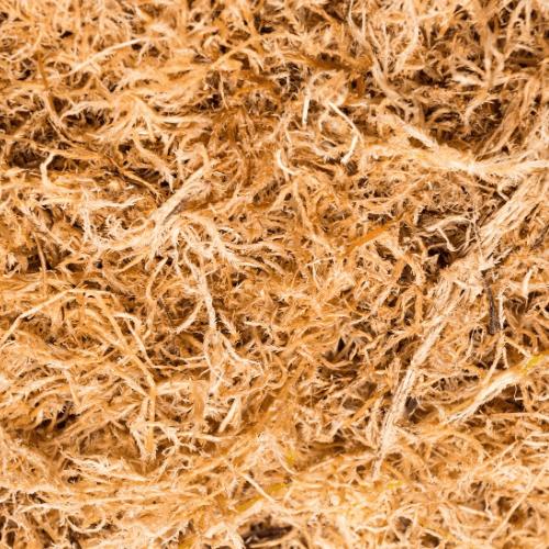 Raw Wildcrafted Sea Moss Gel Bundle (ATLANTA LOCAL ONLY)