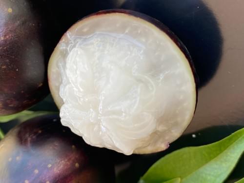 """Plinia coronata var """"Olho de Boi """""""