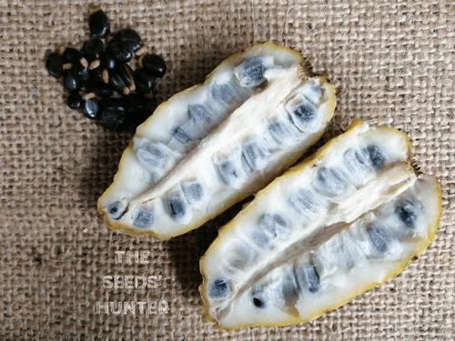 Annona hypoglauca