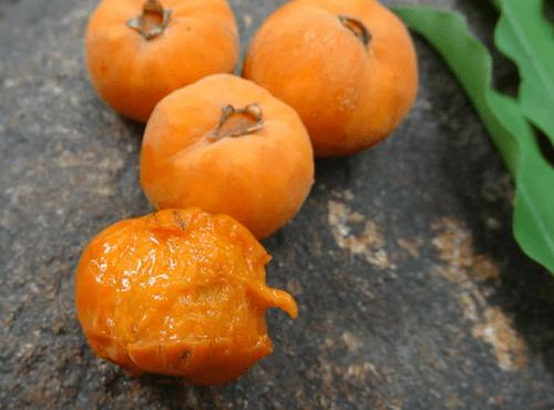 Uvaia-do-visconde ( Eugenia beaurepairiana _Myrtaceae )