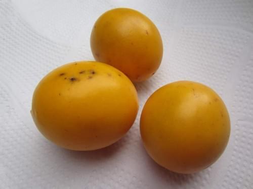 Caimitillo ( Pouteria Sp )