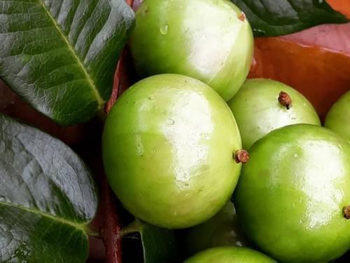 Jaboticaba Branca-Mel ( Plinia aureana )