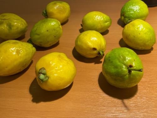 Uvaia_Peba ( Eugenia arrabidae _Myrtaceae )