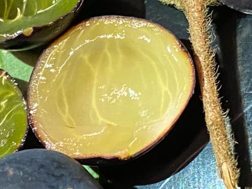Mini jabuticaba azul ( Myrciaria plinioides  _Myrtaceae)
