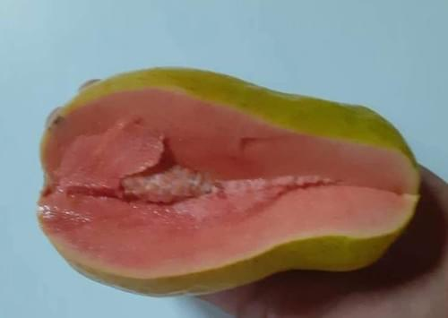 Cuban Guava ( psidium guajava )
