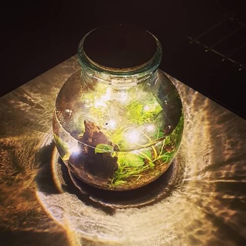 Bouchon lumière