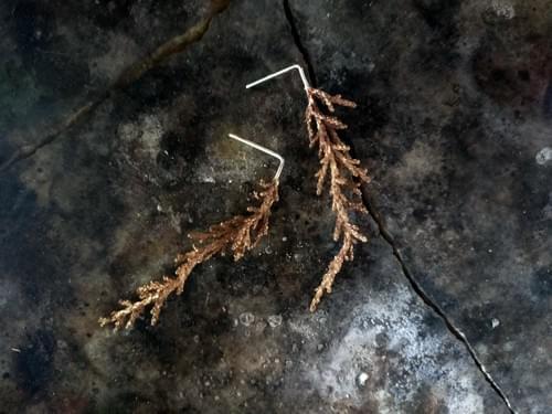 Huon pine stud earrings