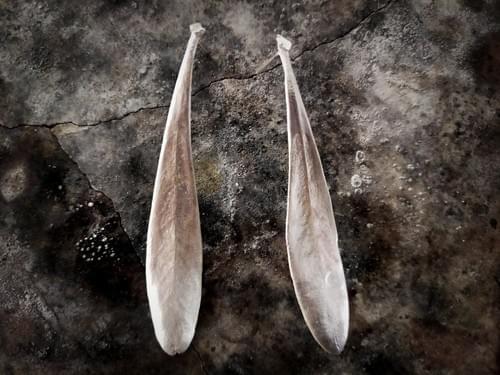 Tasmanian waratah stud earring