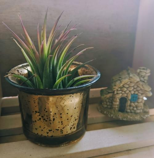 Small air plant with decorative holder
