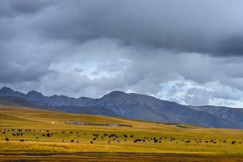 Pastoral area