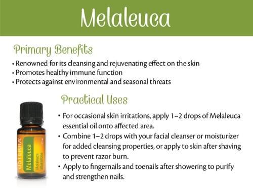 Melaleuca / Tea Tree