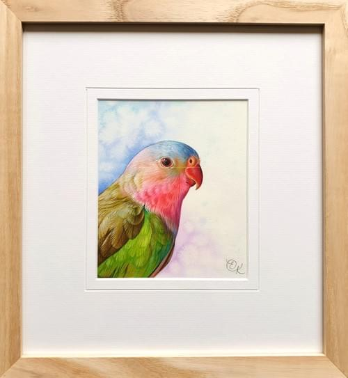 SOLD-Princess Parrot