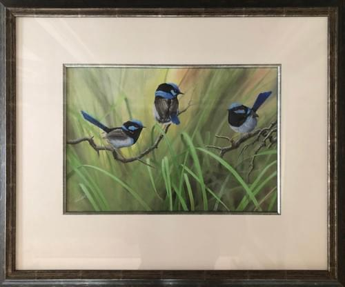 Superb Blue Wrens