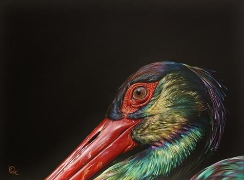 Iridescent Beauty - Black Stork