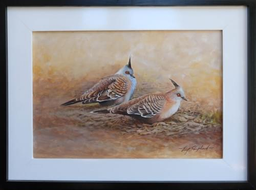 Crested Doves