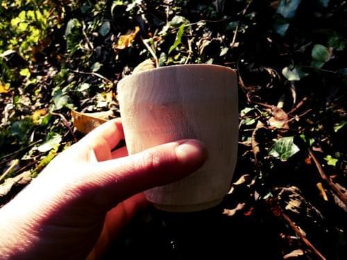 Sycamore Cup