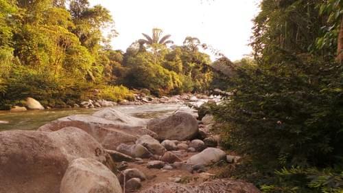 Donacion Bosque Protector