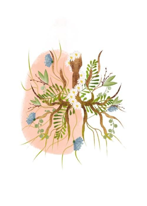 Botanical Lungs 2