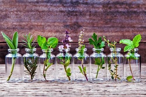 Balade huiles essentielles : initiation à l'aromathérapie (Frontignan)