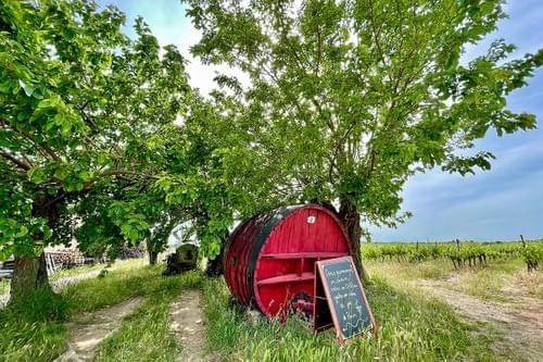 Raisin & Trottinette : Escapade vigneronne en trottinette électrique (Juvignac - 34)