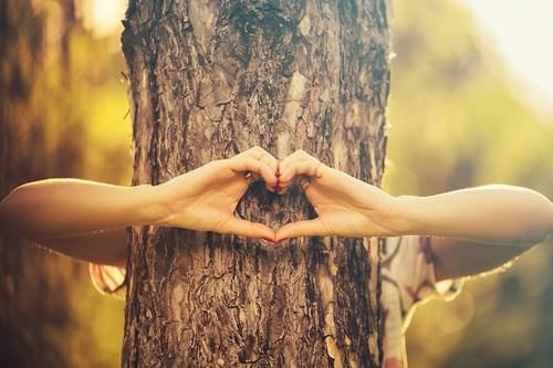 Atelier sylvothérapie : prenez un bain de forêt ! (Frontignan)